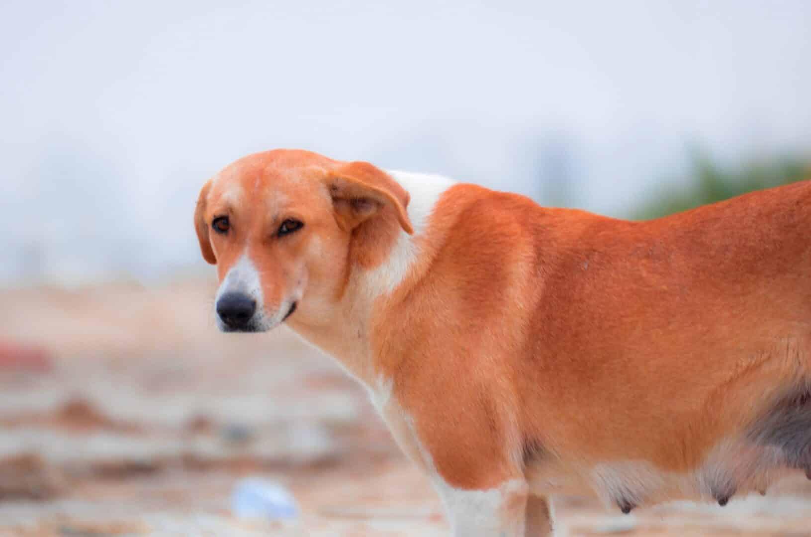 Curiosidades sobre cachorros - 22 fatos sobre os animais domésticos