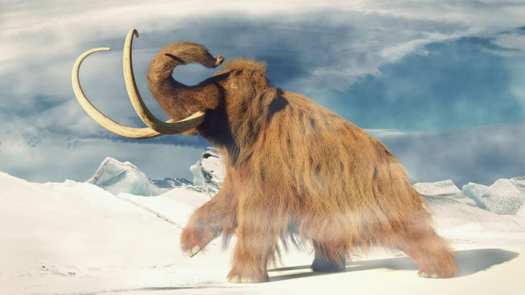 Mamute – Características e extinção dos antepassados dos elefantes