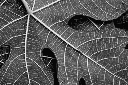 Fractal - o que é, como surgiu e como faz parte da natureza