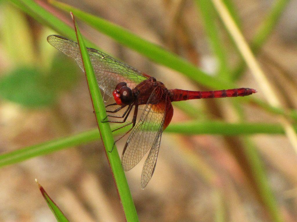 Fotografia do animal para ilustração do item
