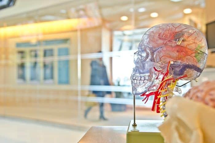 Os lados do cérebro – Como se dividem e mitos e verdades sobre eles