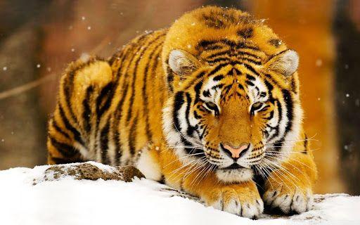 saiba qual e o animal mais rapido do mundo e seus sucessores 11