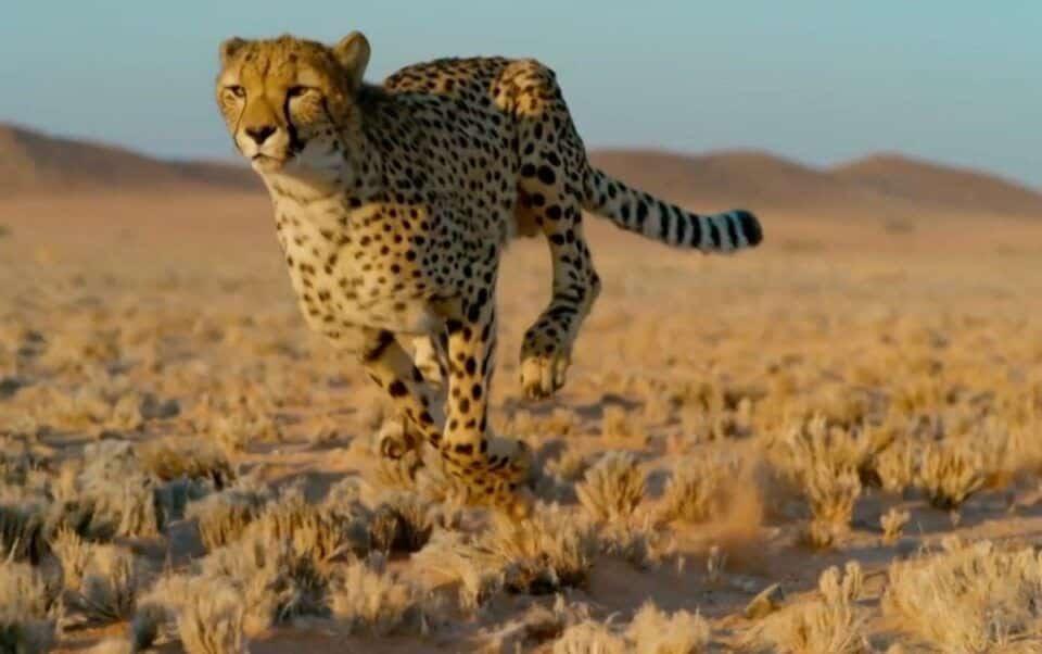 Animal mais rápido do mundo – Qual é e seus sucessores
