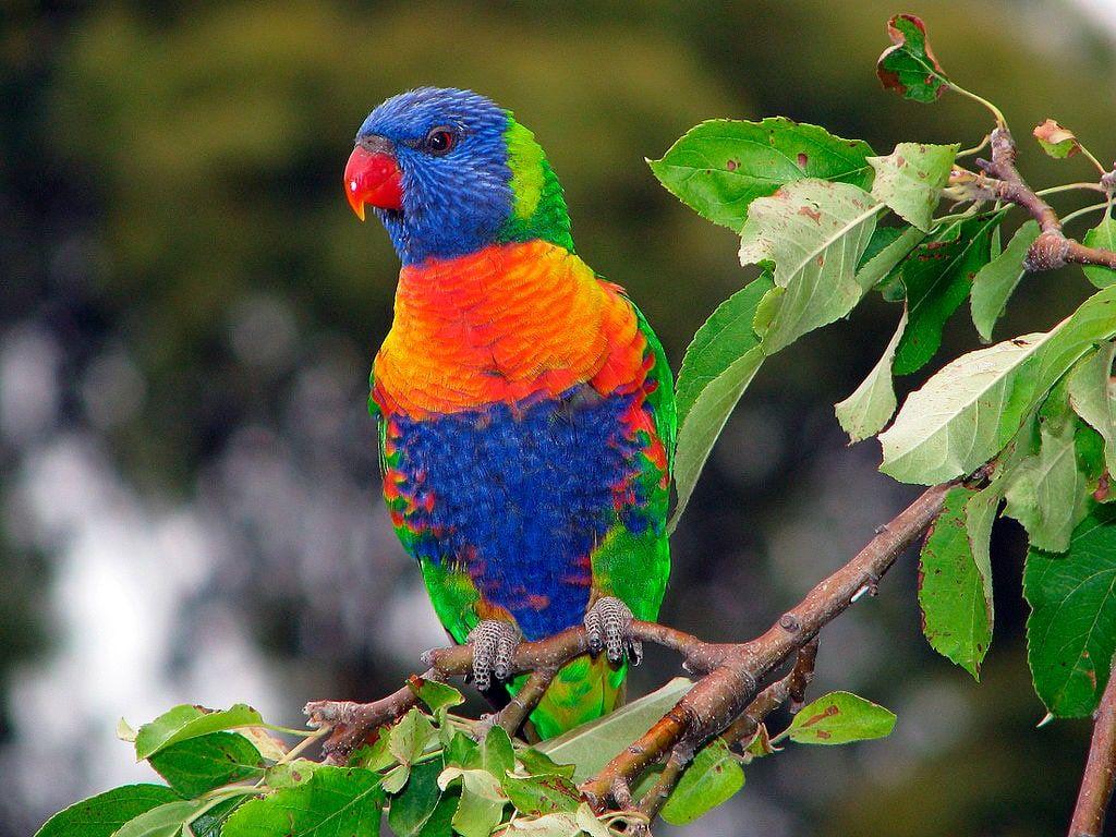 Aves exóticas - 15 espécies diferentonas para você conhecer