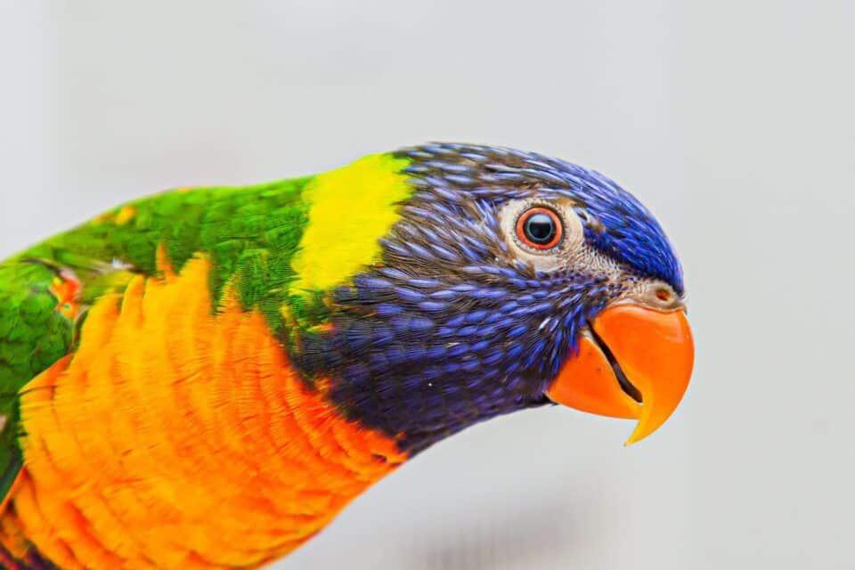 Aves exóticas – 15 espécies diferentonas para você conhecer