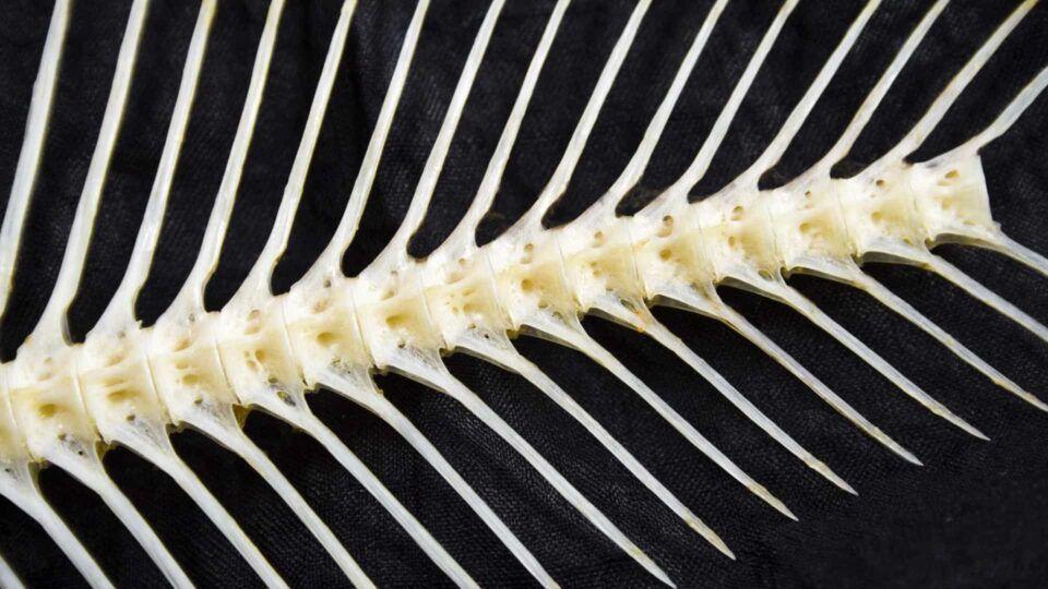 Espinha de peixe na garganta – Como lidar com o problema