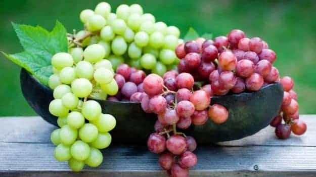 Frutas cítricas - principais benefícios e variações mais populares