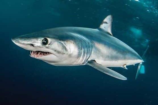 peixe mais rapido do mundo qual e caracteristicas e outros peixes rapidos 6