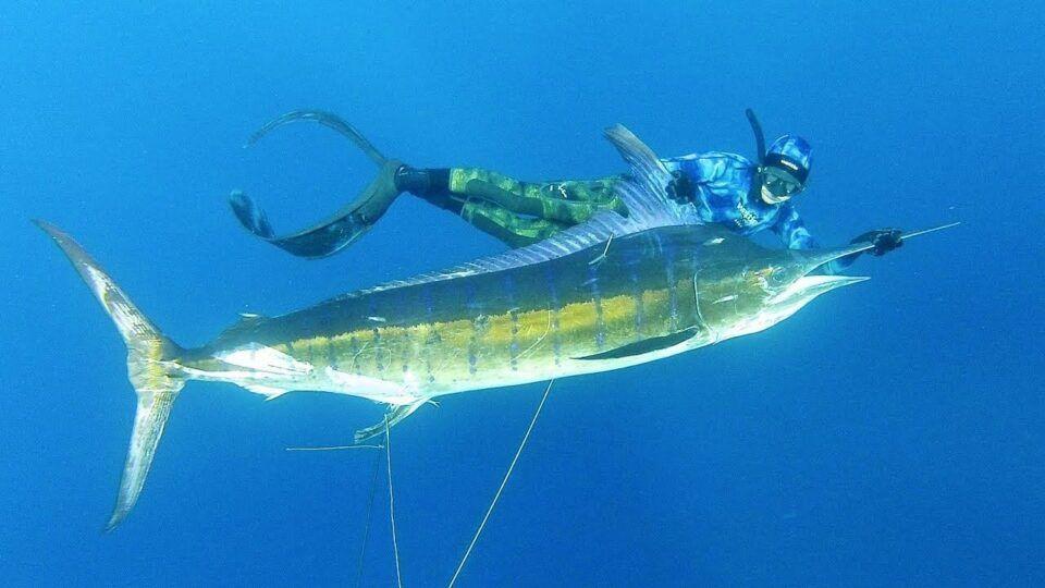 Peixe mais rápido do mundo, qual é? Lista de outros peixes rápidos