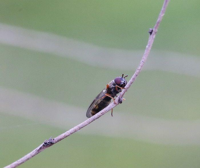 Vagalumes insetos com brlho