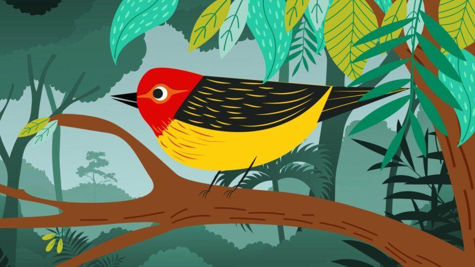 Lenda do Uirapuru – História do famoso pássaro do folclore brasileiro