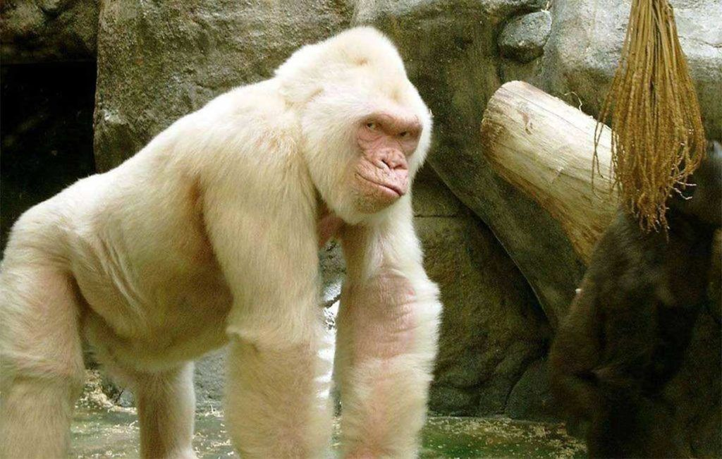 Animais albinos - 27 criaturas singulares que chamam a atenção pela cor