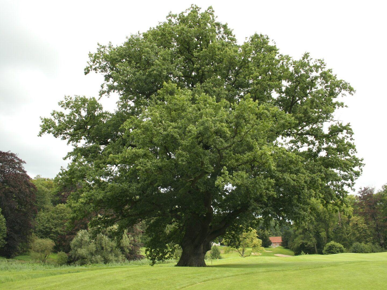 Árvore de Natal - Origem, história e toda sua evolução até os dias atuais