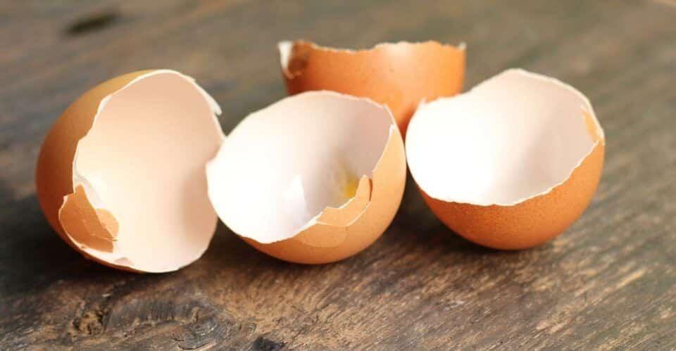 Casca de ovo, como usar? Consumo, reutilização e benefícios