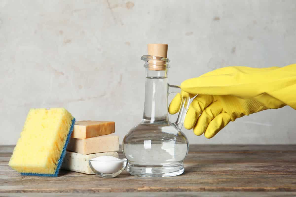Como acabar com cupim - soluções caseiras para eliminar as pragas
