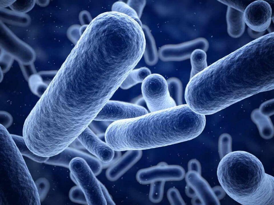 Listeria, o que é? Riscos, sintomas e dicas de prevenção