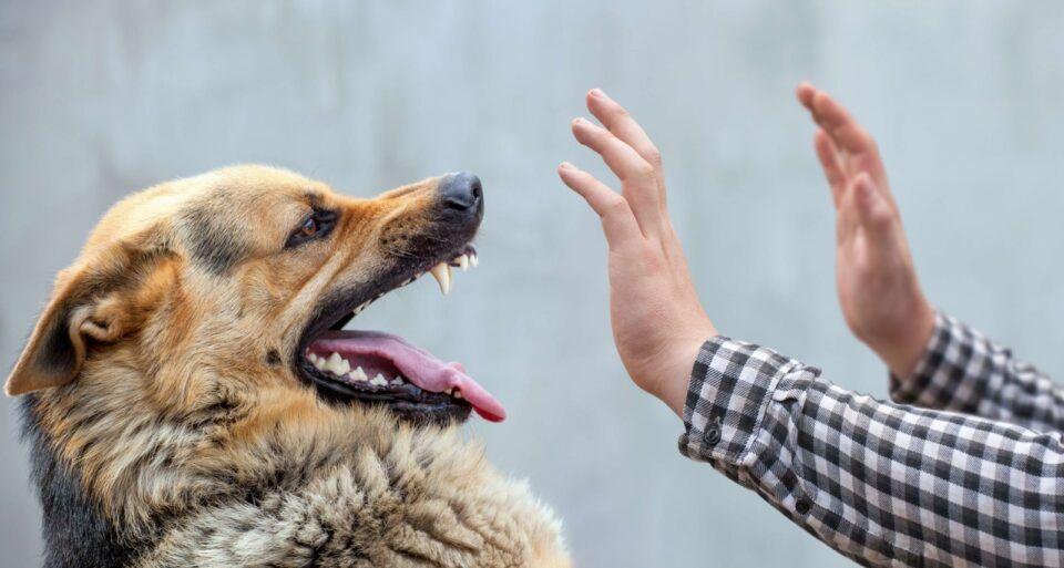 Mordida de cachorro – Prevenção, tratamento e riscos de infecção