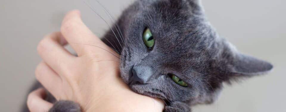 Mordida de gato – Prevenção, tratamento e riscos de infecção