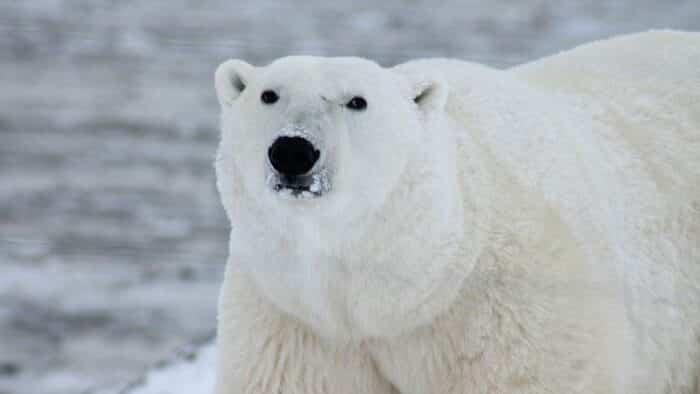 animais mais perigosos do mundo