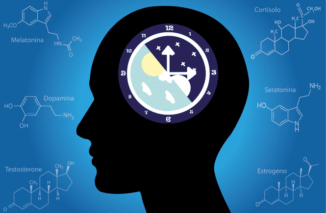 ciclo circadiano o que e funcao e qual a importancia para a saude do corpo 2