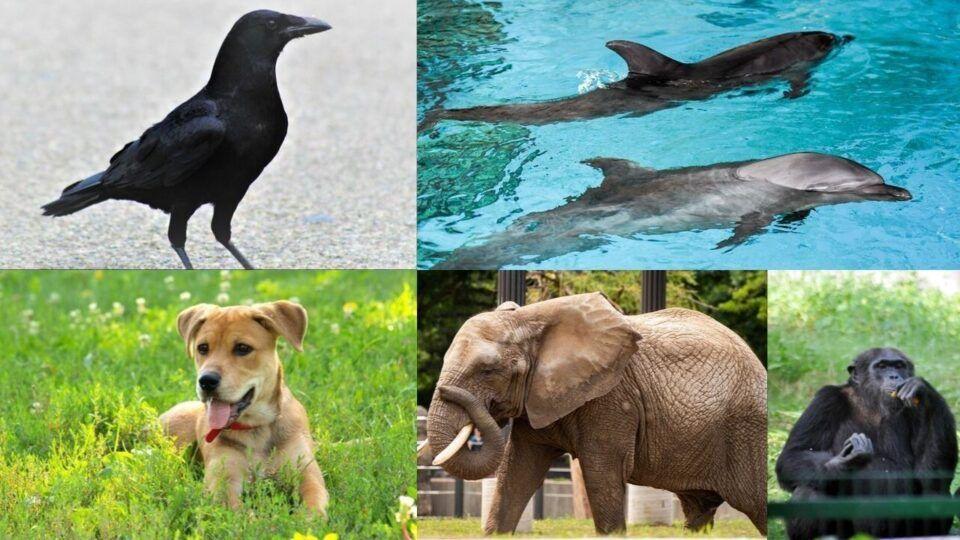 Animais mais inteligentes do mundo – Quais são eles
