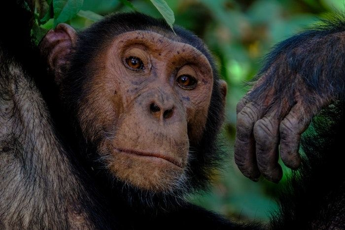 Conheça os animais mais inteligentes e incríveis do mundo