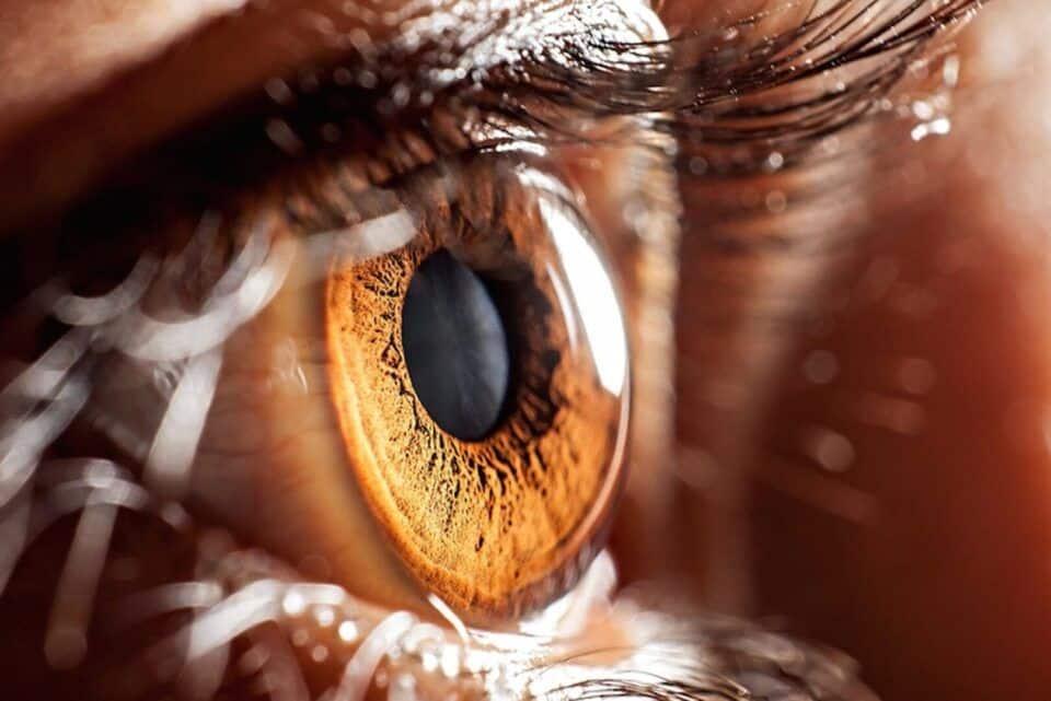 Curiosidades sobre o olho humano – Funcionamento da visão