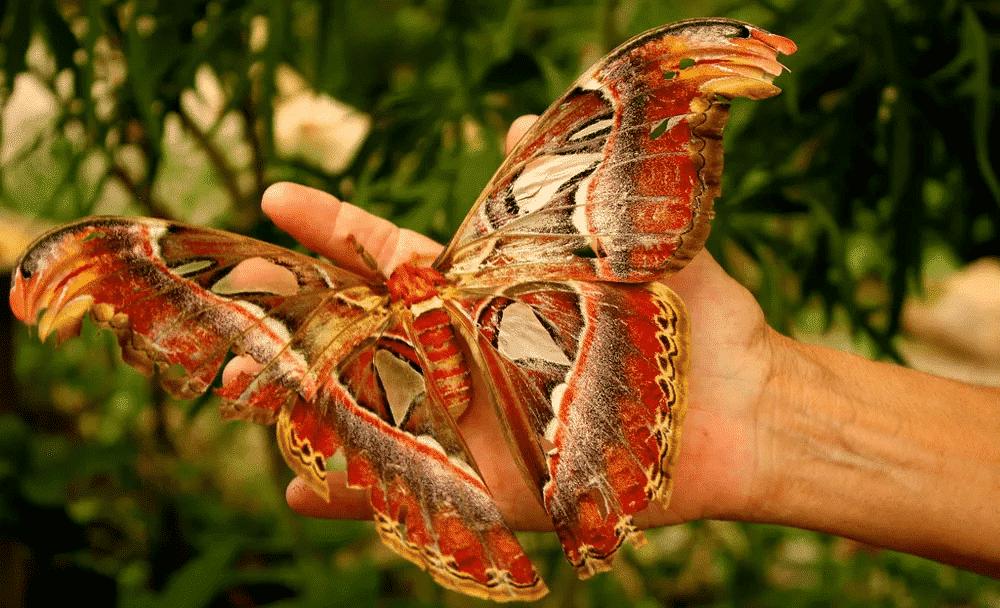 Maiores insetos do mundo - 10 animais que surpreendem pelo tamanho