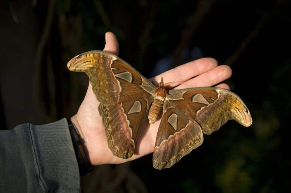 Maiores insetos do mundo – 10 animais que surpreendem pelo tamanho