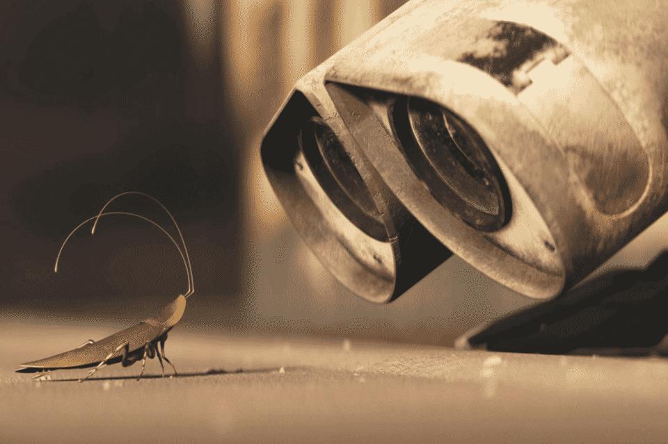 Medo de barata – O que pode causar, tratamentos e curiosidades