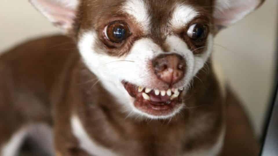 Medo de cachorro – Causas, sintomas e como tratar essa fobia