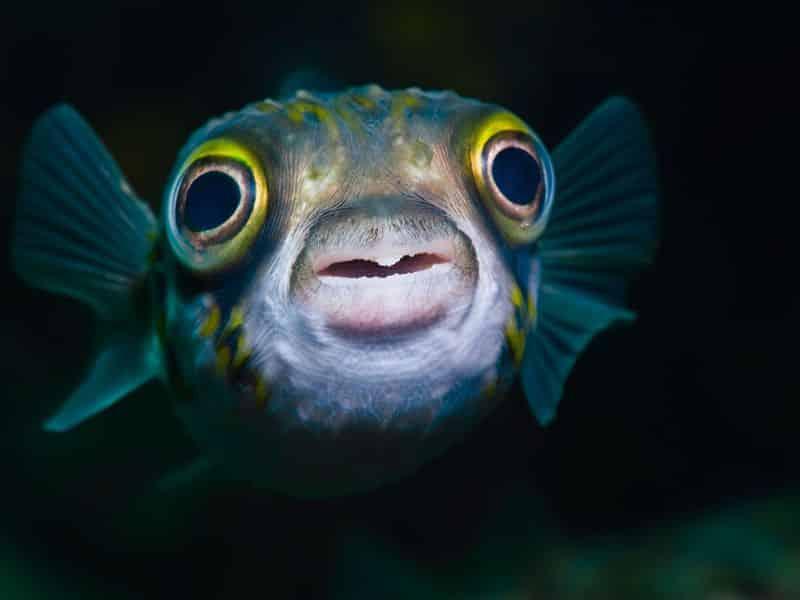 Peixe sente dor? Especialistas dão parecer sobre estímulos nos animais
