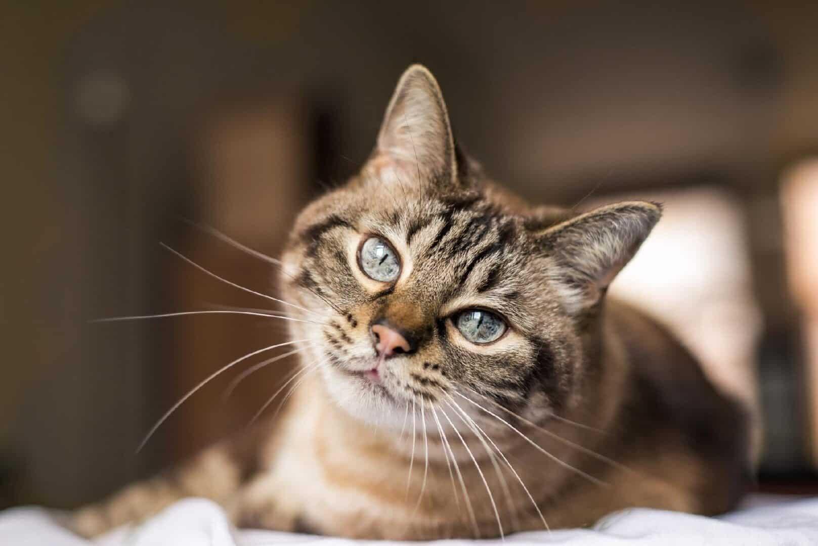 Personalidade dos gatos - Sabia que seu pet tem uma?