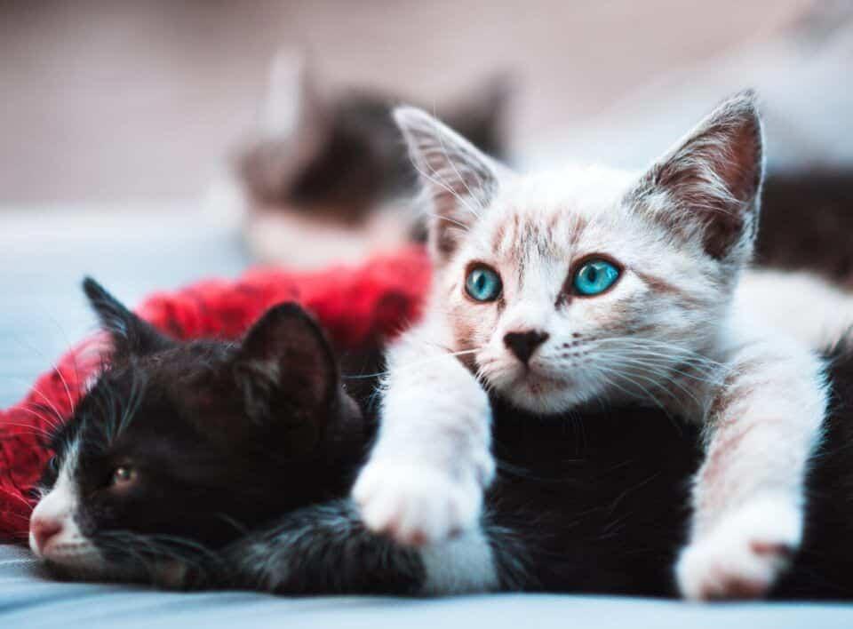 Personalidade dos gatos – Sabia que seu pet tem uma?