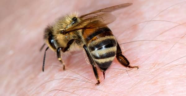 Picada de abelha - sintomas, riscos e o que fazer quando acontecer