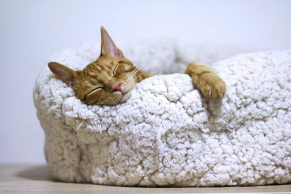 Qualidade do sono – Como dormir melhor e otimizar as horas de descanso