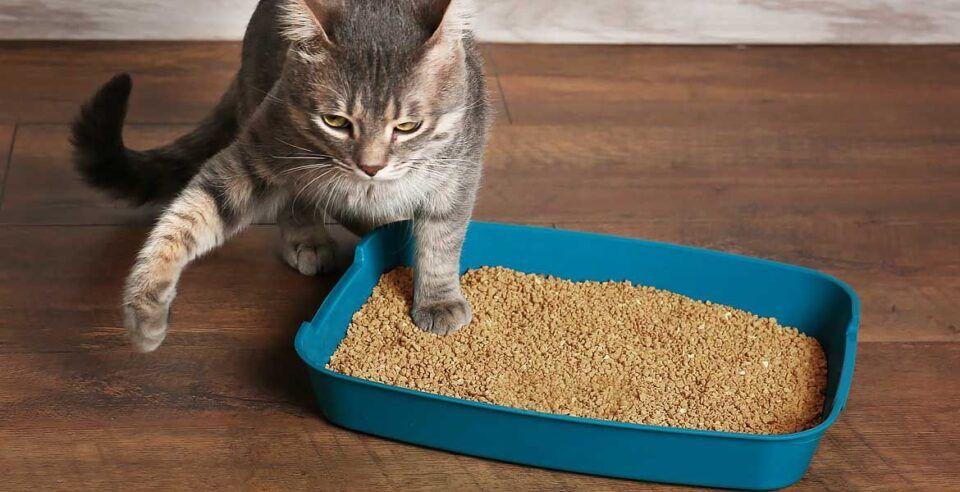 Caixa de areia para gatos – Como escolher para o seu bichano
