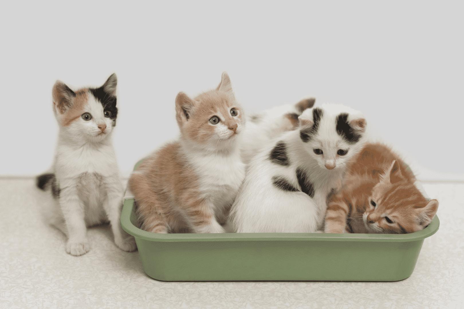 caixa de areia para gatos como escolher a ideal para o seu bichano 2