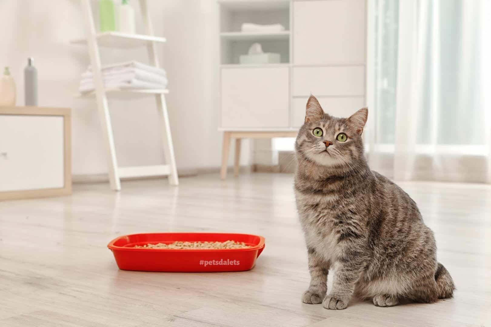 caixa de areia para gatos como escolher a ideal para o seu bichano 3