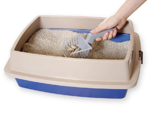 caixa de areia para gatos como escolher a ideal para o seu bichano 5