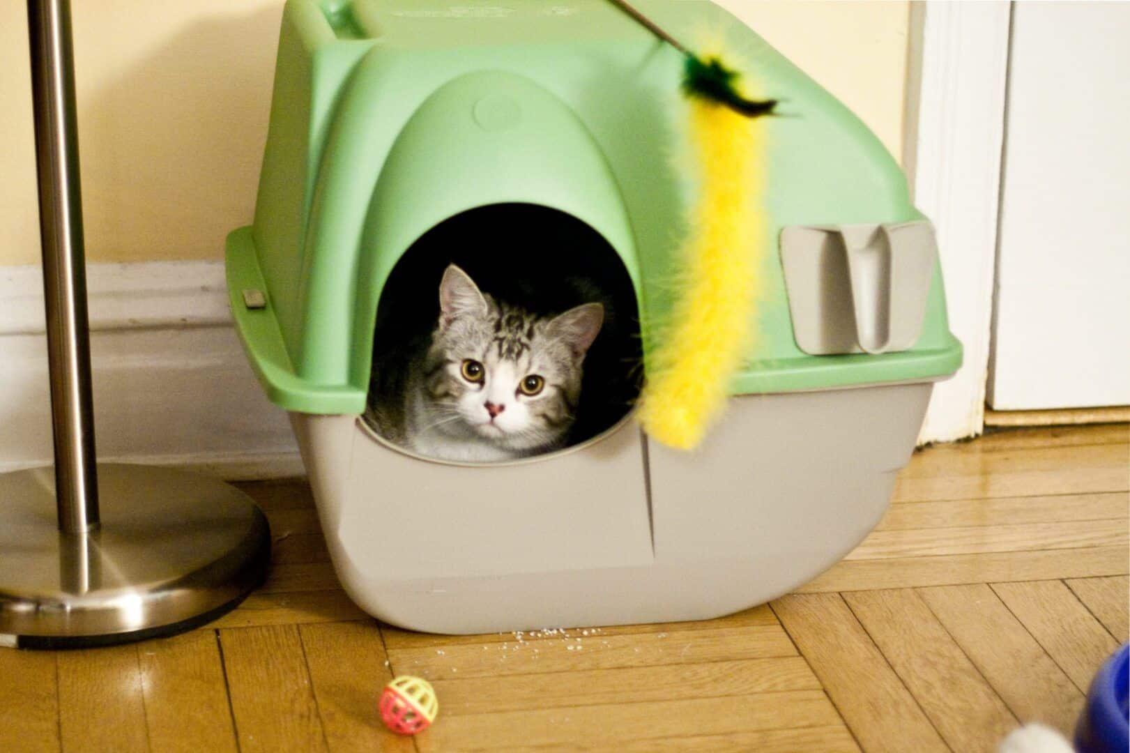 caixa de areia para gatos como escolher a ideal para o seu bichano 7