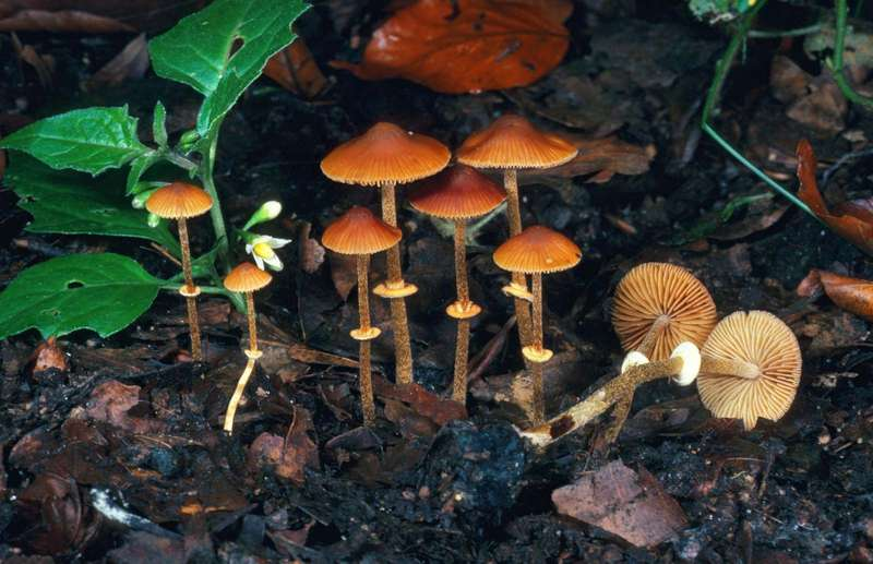 Cogumelos venenosos - como identificar e principais exemplares
