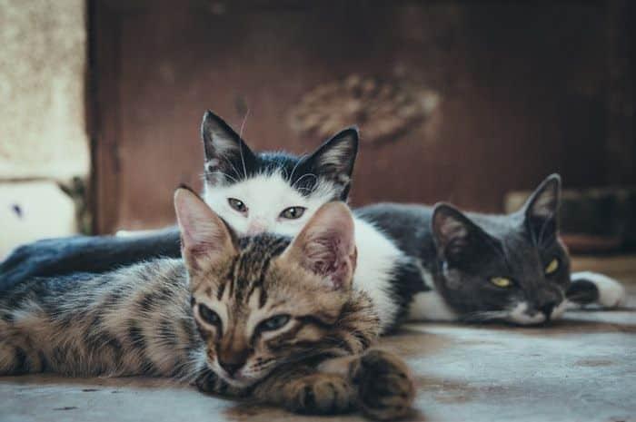 doencas de gatos conheca as mais comuns e saiba como preveni las 1
