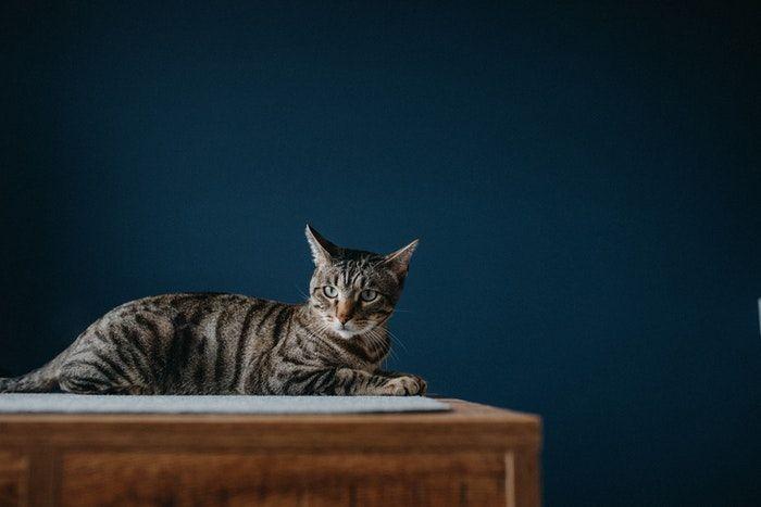 doencas de gatos conheca as mais comuns e saiba como preveni las 10