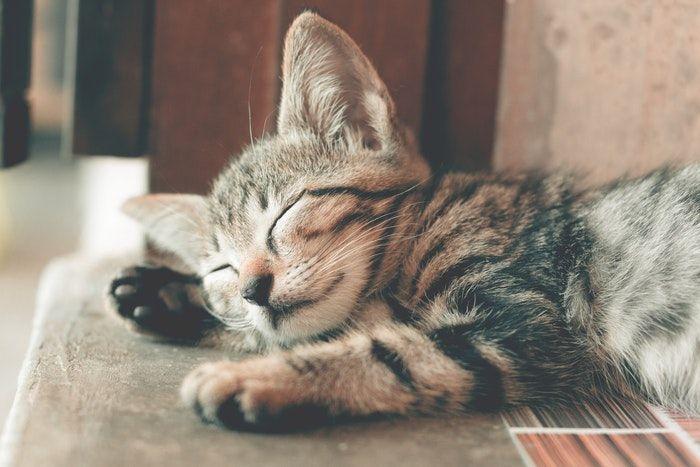 doencas de gatos conheca as mais comuns e saiba como preveni las 2