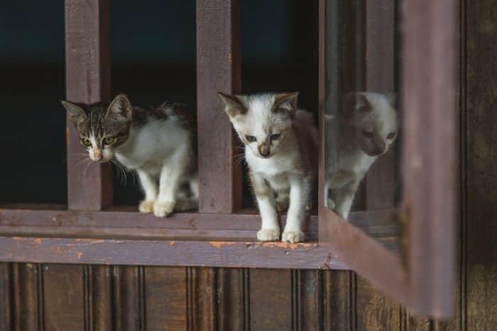 doencas de gatos conheca as mais comuns e saiba como preveni las 7
