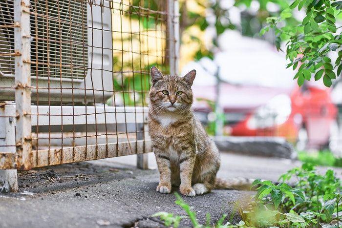 doencas de gatos conheca as mais comuns e saiba como preveni las 8