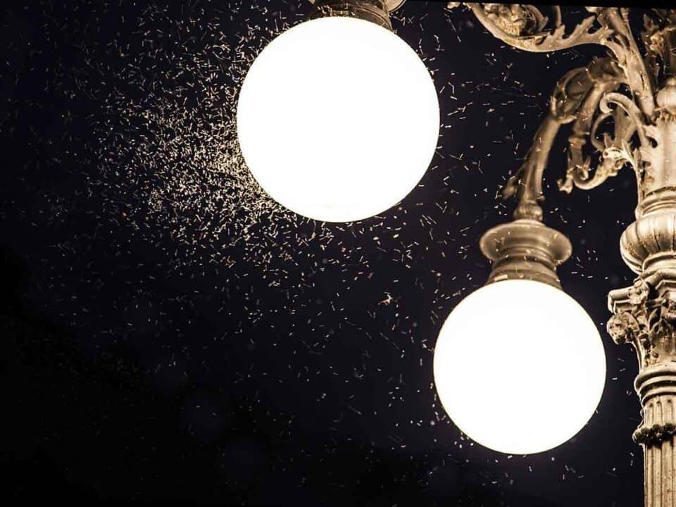 Mosquitos de luz – Porque eles aparecem pela noite e como espantá-los