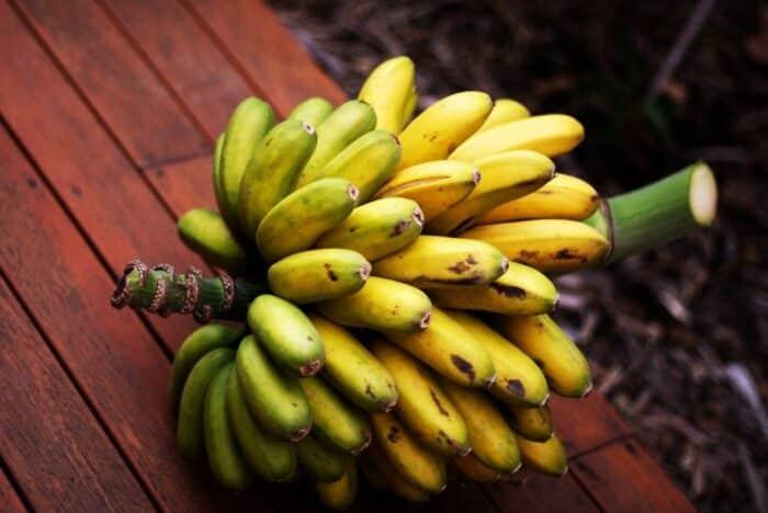 Tipos de banana: principais variedades encontradas no Brasil