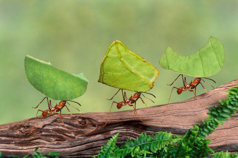 Tipos de formigas - principais características e diferenças entre espécies